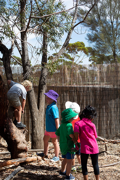Port-Augusta-West-Childhood-Services-Centre-Outdoor-Play-Climbing-Trees