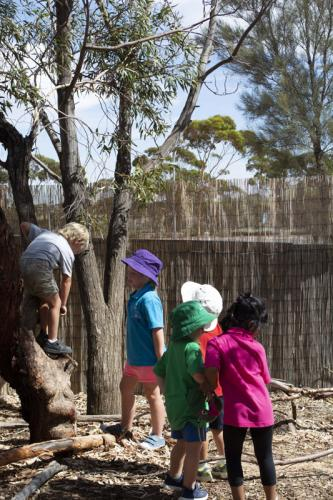 Port-Augusta-West-Childhood-Services-Centre-Climbing-Trees-Play-Natural-Materials-Preschool